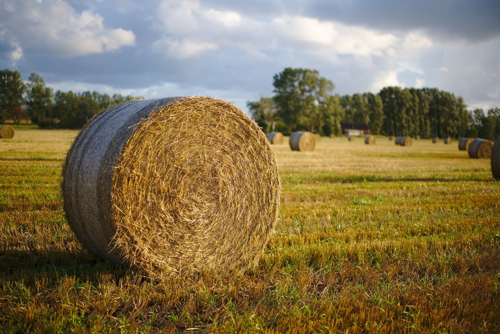 Hay ball end of summer